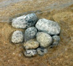 Petoskey Stone On Beach | Best places to find petoskey stones? Northern Michigan, particularly ...