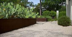 Corten steel planters with beautiful Opuntia / Cortenstalen plantenbakken met fraaie opuntia's