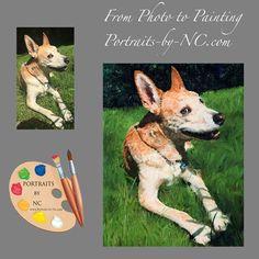 Portraits by NC The #American #Dingo  #portraits of #pets https://portraits-by-nc.com/blogs/news/american-dingo-portrait