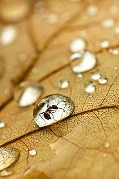 30 Beautiful Pictures of Animals Macro Photography