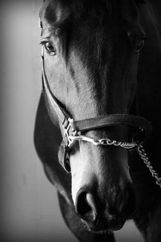 i would love to get a shot of my horse this way, minus the halter