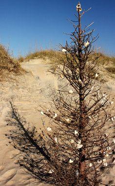 A Beach Christmas Tree