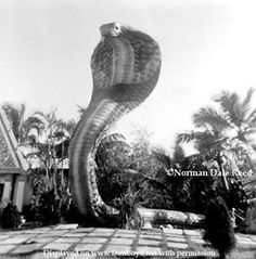 Miami Serpentarium...Bill Haas and the U of Miami Medical School saved may life's from snake bites, using the venom his institution produced for the medical community.