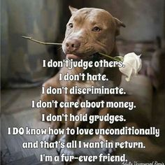 Pitbulls... and I'm forever yours :)