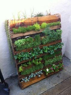 DIY Outdoor Wood Pallet Herb Garden – Makeful - New ideas Vertical Pallet Garden, Herb Garden Pallet, Pallets Garden, Pallet Gardening, Verticle Garden Wall, Gardening Tips, Balcony Gardening, Vegetable Gardening, Succulents Garden