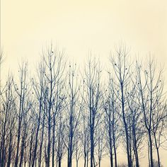 The forest of bare trees