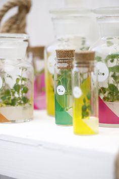 Lo mejor es que además de poder usar las plantas por sus propiedades medicinales...son tan lindas!!! que las puedo tener un tiempo sólo par mirarlas dentro de sus frascos...