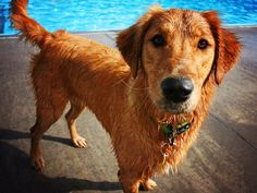 Improve Your Dog's Skin & Coat With This One Simple Hack