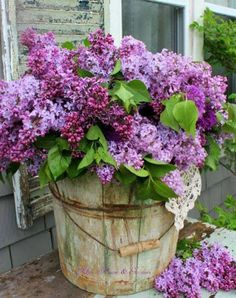 Purple flowers are a great way to add interest to your yard or landscape. See some of our favorite purple garden flowers! Lilac Flowers, Spring Flowers, Beautiful Flowers, Purple Roses, Purple Lilac, Container Gardening, Vegetable Gardening, Outdoor Gardens, Planting Flowers