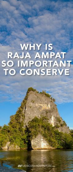 Raja Ampat needs to be conserved because it has the highest concentration & diversity of marine life on earth. Read more about going plastic-free. Pacific Ocean, Marine Life, Scuba Diving, Diversity, Conservation, Tourism, Environment, Coral, Earth