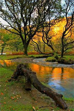 Beautiful autumn colors in Glendalough, County Wicklow.
