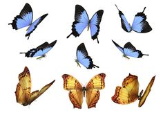 Free Butterfly Photo Overlays, Photography Overlays for Photoshop, Flying butterfly