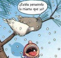 Por eso no me gustan los pájaros.
