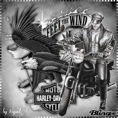 GIPHY is your top source for the best & newest GIFs & Animated Stickers online. Harley Davidson Decals, Harley Davidson Posters, Harley Davidson Pictures, Harley Davidson Gifts, Wall Decals, Wall Art, Stickers Online, E Cards, Diy Crafts