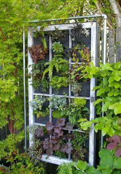 When growing a vertical garden instead of just growing plants in felt pockets why not hang an old picture or window frame in front to give it a little added depth.  A neutral color to make it soft and subtle.  A bright color to add eye movement and pop. #GardenIdeas