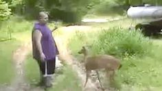 Guy gets beat down by a deer.