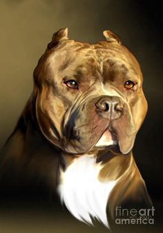 Brown and White Pit Bull by Spano pinned By http://Barkingstud.com
