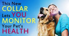 The PetPace smart collar contains contact sensors that continuously monitor an animal, and give information about your pet's health and comfort.  http://healthypets.mercola.com/sites/healthypets/archive/2014/12/20/petpace-smart-collar.aspx