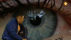 Thema: Zintuigen & Lichaam. Het oog is één van onze zintuigen. Met het oog kun je zien. Hoe zit zo'n oog eigenlijk in elkaar? Raaf en Fahd bespreken in het clubhuis alle zintuigen. Het oog wordt van dichtbij bekeken. Welk dier heeft bijvoorbeeld de beste ogen?