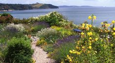 Gardening by the coast offers specific challenges and opportunities. You can take advantage of the mild climate to grow not-so-hardy plants with confidence, but will have to choose them carefully to ensure they can cope with the buffeting winds and salt-laden air. Ideally, create a barrier of native shrubs and trees with planting bays and pockets to accommodate choice but less tolerant shrubs, perennials and bulbs. Sun, sea and seclusion – the perfect combination!