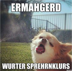 This dog's face cracks me up. Ermahgerd!!!!