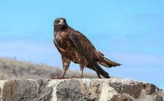 Bald Eagle, Bird, Animals, Animales, Animaux, Birds, Animal, Animais