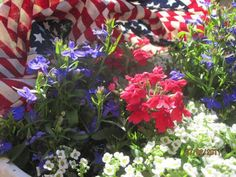 red+white+and+blue+garden+images | flowers+banner+red+white+and+blue+verbena.jpg