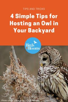 4 Simple Tips for Hosting an Owl in Your Backyard - Birds and Blooms Owl Facts, Bird Facts, Garden Animals, Garden Owl, Garden Bird Feeders, Owl Box, How To Attract Birds, How To Attract Hummingbirds, Backyard Paradise