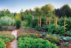 Why Natural Insect Control Works Better - Organic Gardening - MOTHER EARTH NEWS