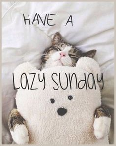 Image result for good morning sunday lazy day