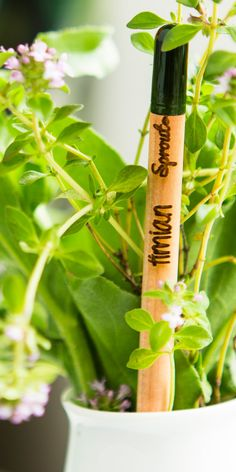 Sprout World - the first plantable pencil in the world | #Horticool #ApartmentGardening #Gardening