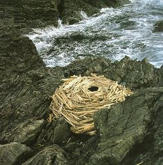 by Andy Goldsworthy.  NANCY.  something to do with your reeds on the rocky front.