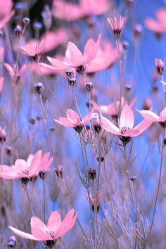 afternoontea7:  (via Summer Meadow Photograph by Tommy Hammarsten - Summer Meadow Fine Art Prints and Posters for Sale)