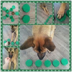 DIY dog brain games; dog enrichment activities ; dog food toys