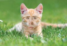 Nic Cage Cats. Funny and disturbing...