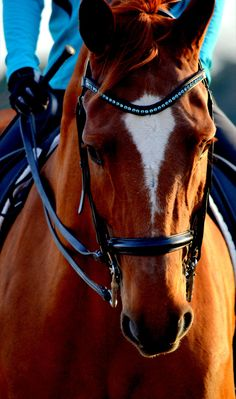 dressagedawg:  Copyright Aly Rattazzi of Rather Be Riding Photography 2012