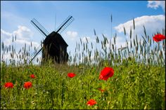 The Windmill Trail in Poland