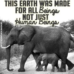 FACT.  So if you give a damn, go vegan, be an animal rights activist, boycott zoos and hellholes like evil SeaWorld AND LET'S SAVE OUR ONLY PLANET