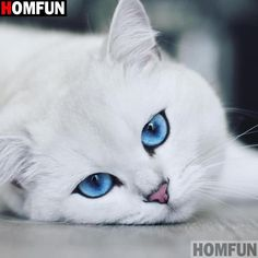 Cute Kittens With Blue Eyes Baby - Cute Cute Baby Cats, Cute Cats And Kittens, Cute Baby Animals, Kittens Cutest, Animals And Pets, Funny Animals, Fluffy Kittens, Pretty Cats, Beautiful Cats