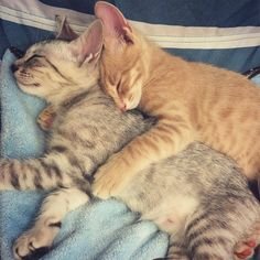 Naps are better together...