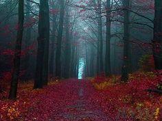korku-filmi ormanlari-Almanya-siyah-orman-resim