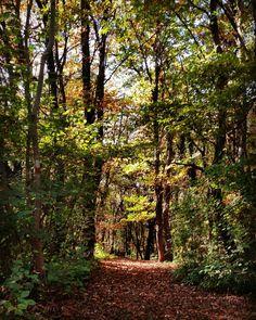 Il bosco sul Col Palis in autunno
