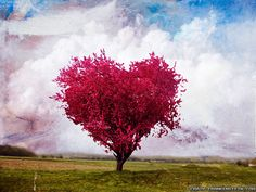 photo of heart shaped trees - Yahoo Search Results
