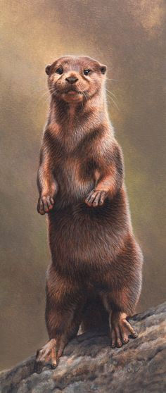 Andrew Hutchinson. Otter standing on rock