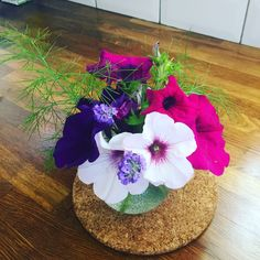 Petunias, fennel and lavender