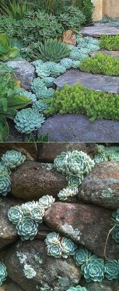 ideas for creating amazing garden succulents - Pflanzen im Freien - Small Yard Landscaping, Succulent Landscaping, Succulent Gardening, Succulents Garden, Propagate Succulents, Landscaping Ideas, Vegetable Gardening, Organic Gardening, Succulent Ideas