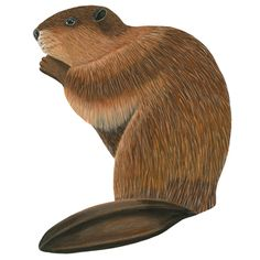 "As nature's contractors - beavers build incredible dams and have a great impact on the ecology. They also make a beautiful addition to your nature-themed room. This realistic - repositionable decal is ideal for pond or river scenes. You can easily imagine that big tail slapping the water or those teeth gnawing trees! Finished Size: 16"" x 12.75"". Contents: 1 Decal. Care: Wipe with Damp Cloth Assembly Required."