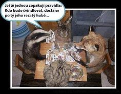 Animals And Pets, I Laughed, Haha, Funny Pictures, Harry Potter, Funny Memes, Punk, Pranks, Pictures