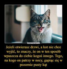 Jeżeli otwierasz drzwi, a kot nie chce wyjść, to znaczy, że on w ten sposób wpuszcza do ciebie kogoś innego. Tego, na kogo on patrzy w nocy, gapiąc się w pozornie pusty kąt – Everything And Nothing, Wtf Funny, Creepypasta, Loki, Good To Know, Cute Cats, Real Life, Humor, Memes