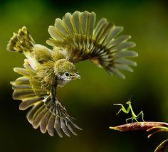 Bird & Mantis